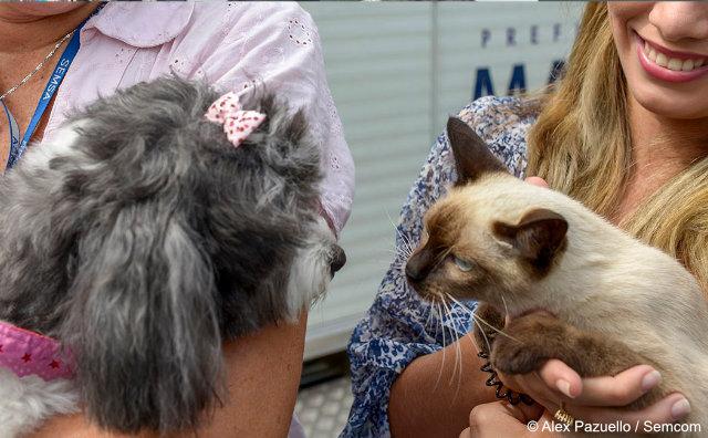 Galerias populares promovem evento de Adoção de Pets