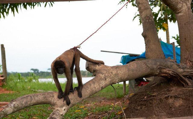 Proteção Animal Mundial releva o sofrimento dos animais silvestres