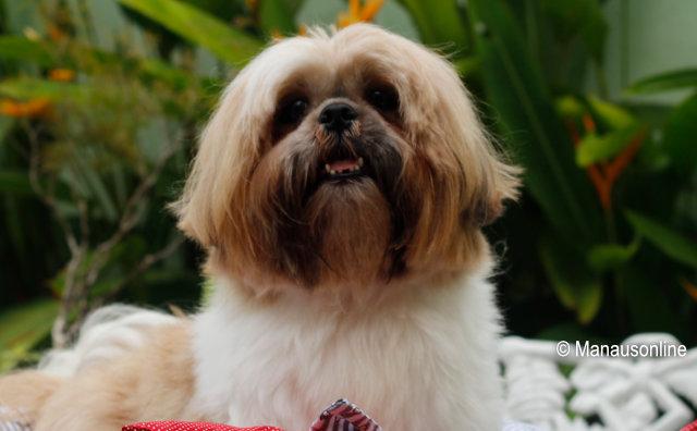 Desfile e feira de adoção de cães movimenta o Millennium Shopping