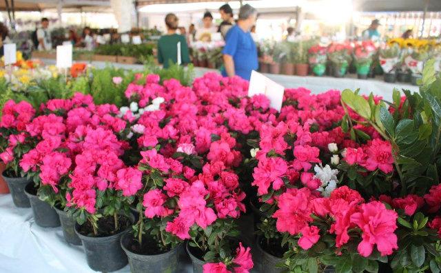 Amazonas Shopping recebe 1ª edição do Festival de Flores de Holambra
