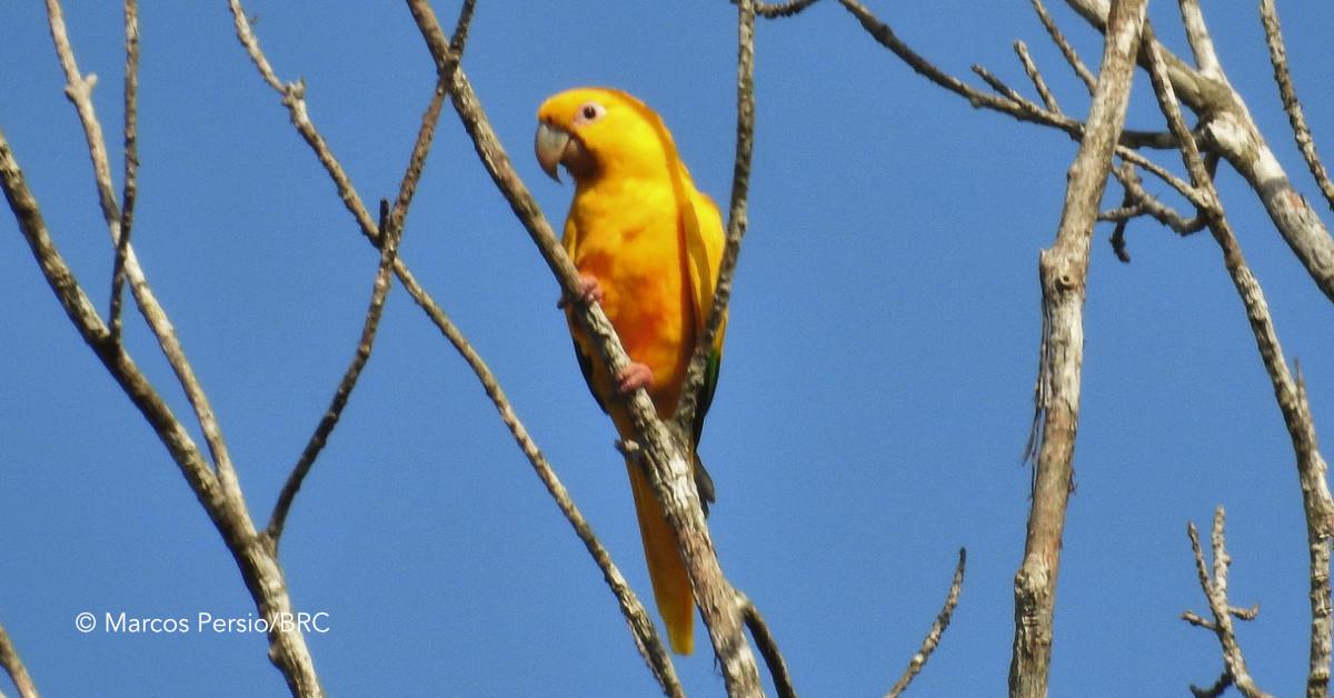 Pesquisa inédita sobre hábitos de aves na Amazônia