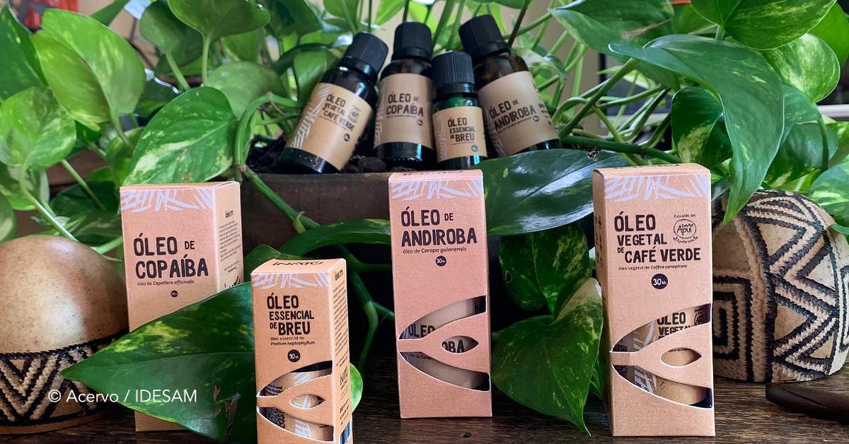 Cadeia de óleos vegetais é exemplo de sucesso para  bioeconomia na Amazônia